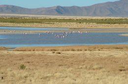 Laguna de Guayatayoc