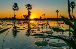 Esteros del Iberá - Fotografía de Mauricio Rossanigo @mauriciorossanigo